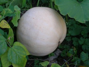 It's time to grow gourds by the reading bench