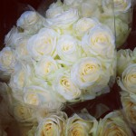 White roses, fresh from Colombia Road market