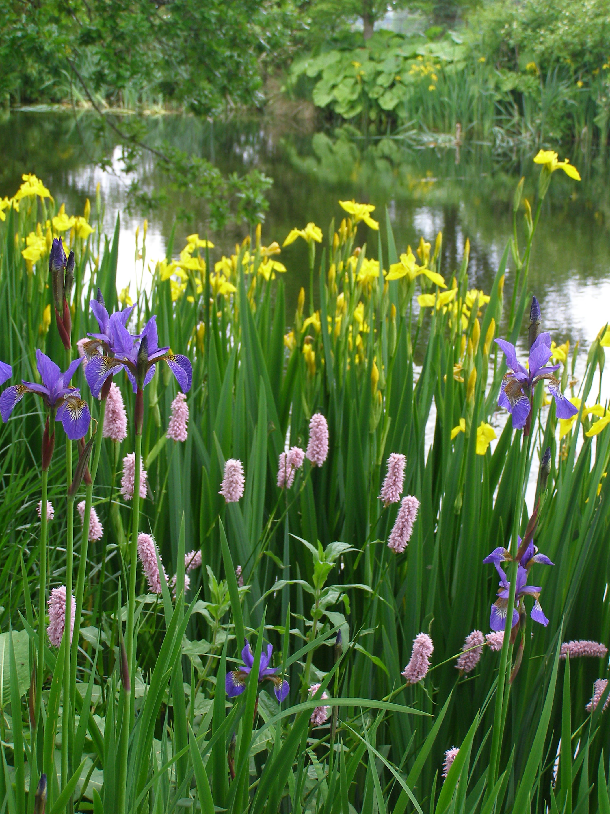 A well landscaped pond opens the possibility of new plants