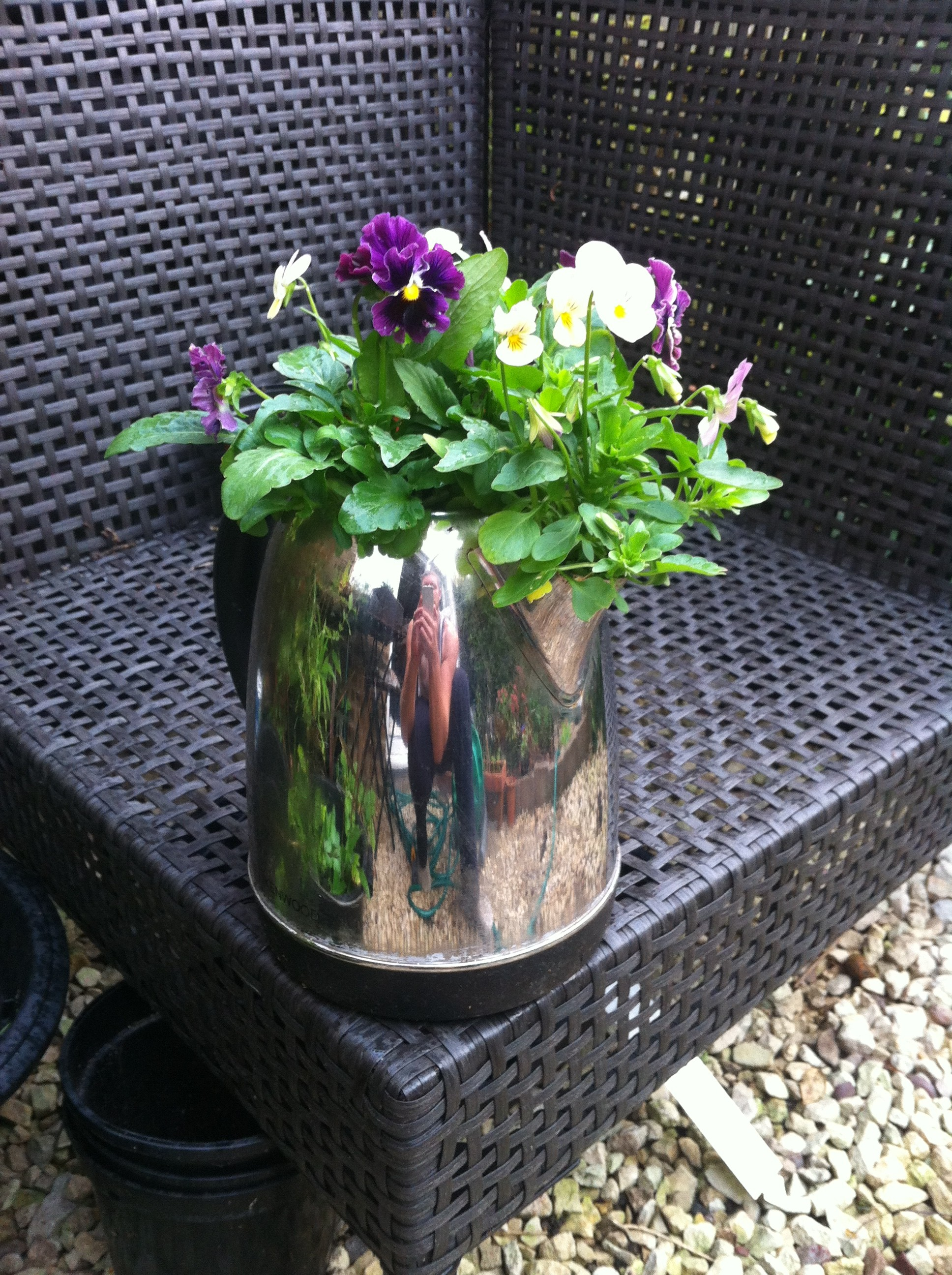 planted kettle
