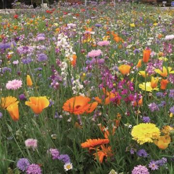 perennial-meadow-cover