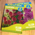 Planting Bulbs in December – Sometimes its NOT too late!