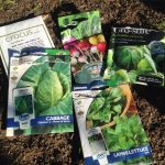 Vegetables to Sow in July