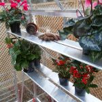 Five Top Tips for Greenhouse Gardening Success in 2017